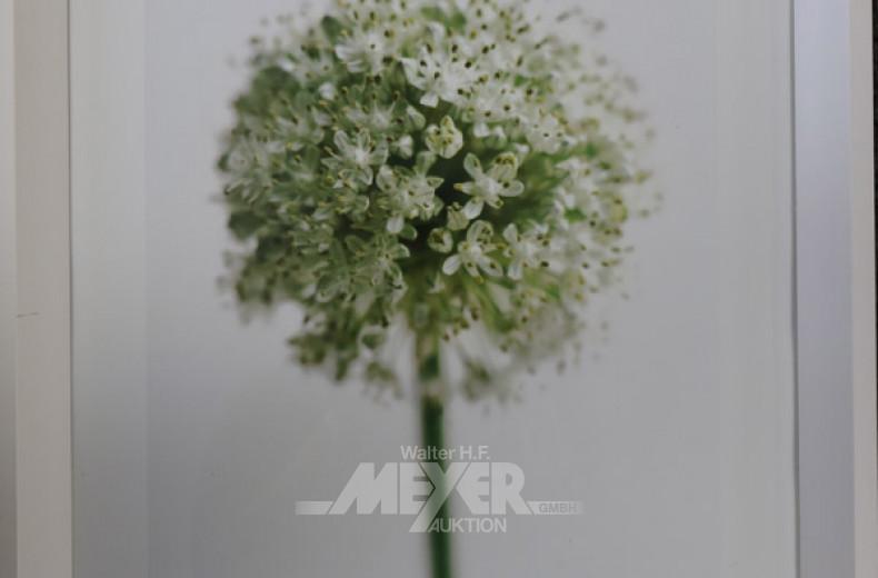 Foto ''Blume''