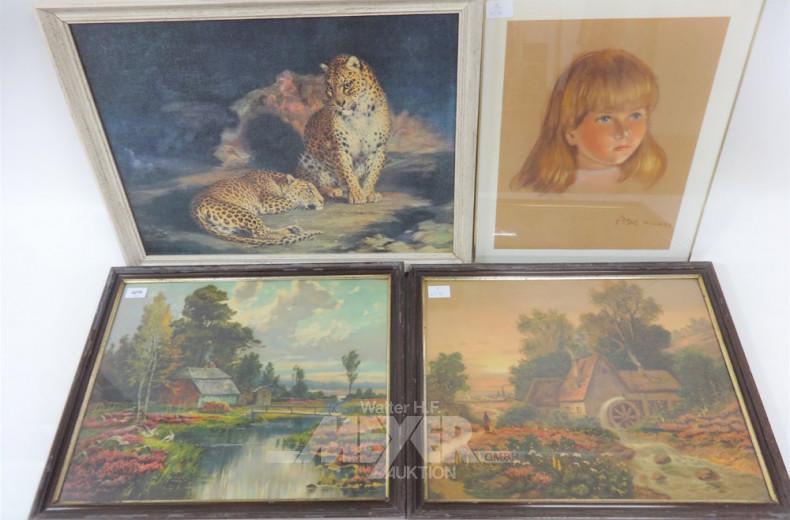 4 div. Drucke ''Geparden, Portrait,