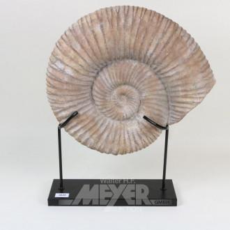 Modell einer versteinerten Muschel,