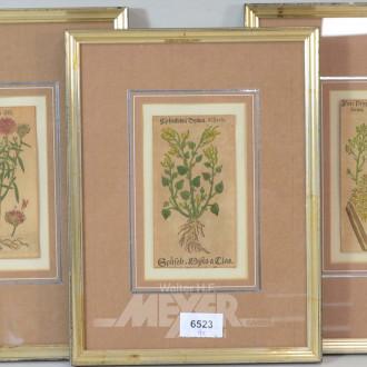 9 antiquarische Pflanzenstiche,
