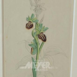 kl. Pflanzenstich ''Orchidee'',