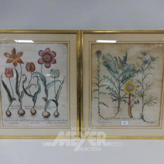 4 color. Pflanzen- Kupferstiche, 18. Jh.,